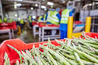 Packing our British Asparagus